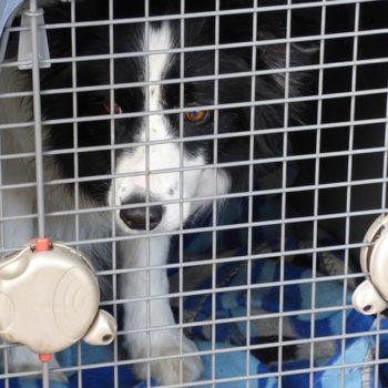 Bringing Pets into New Zealand