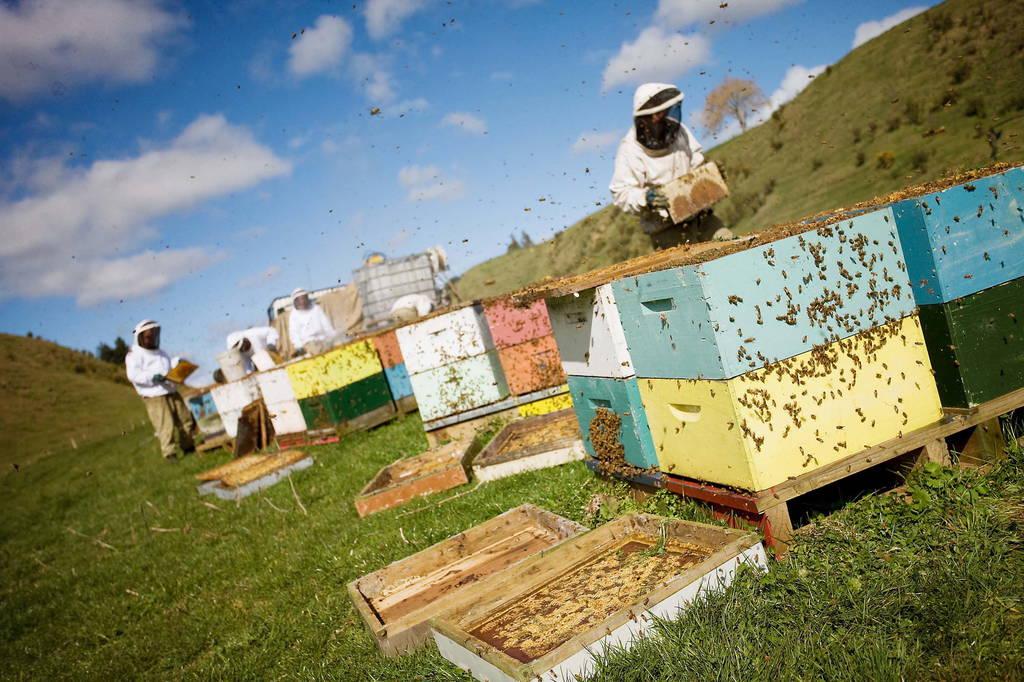 Mossop's Honey - Tourism Bay of Plenty