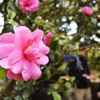 10 Must-See Parks & Gardens in Taranaki