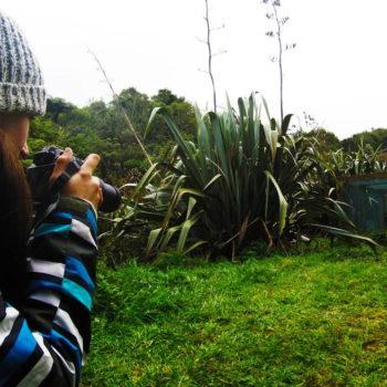 Rare Wildlife Encounter at Mt Maungatautari