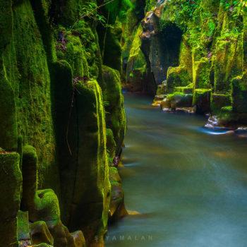 Te Urewera Rainforest Route: 9 Epic Stops!