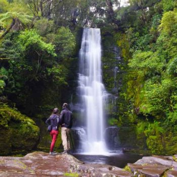 10 Incredible Things to Do in The Catlins