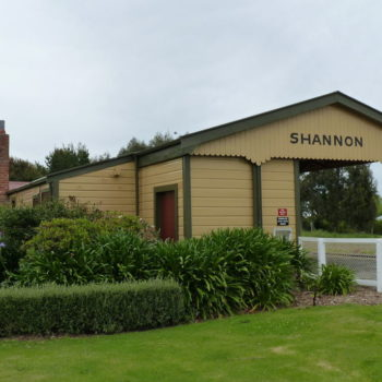 5 Fun Things to Do in Shannon