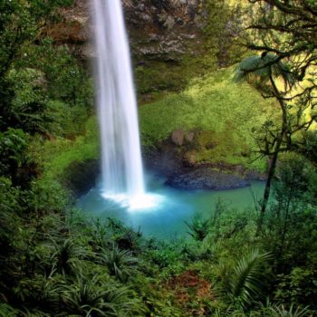 10 Ways to Protect New Zealand's Forests