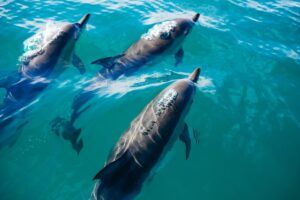 13 Best Things to Do in Kaikoura
