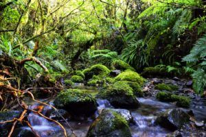 7 Luxury Activities in New Plymouth