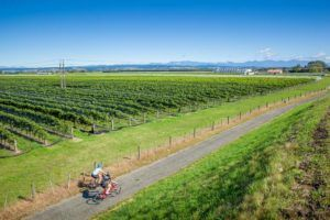 9 Things to Do in Nelson for Foodies
