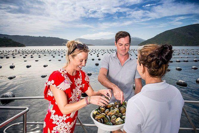 8 Luxury Activities in Picton