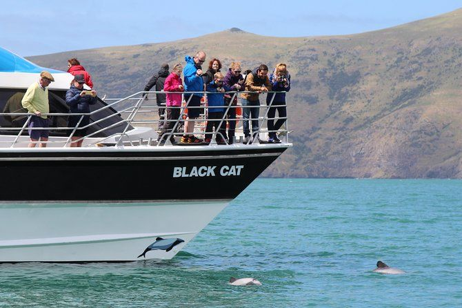 The Guide to Akaroa for Families