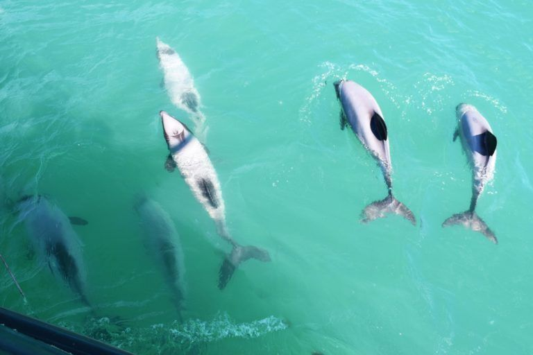 10 Things to Do in Akaroa with Kids