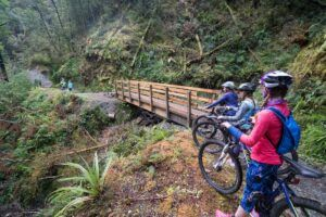 The Best Day Trips from Greymouth