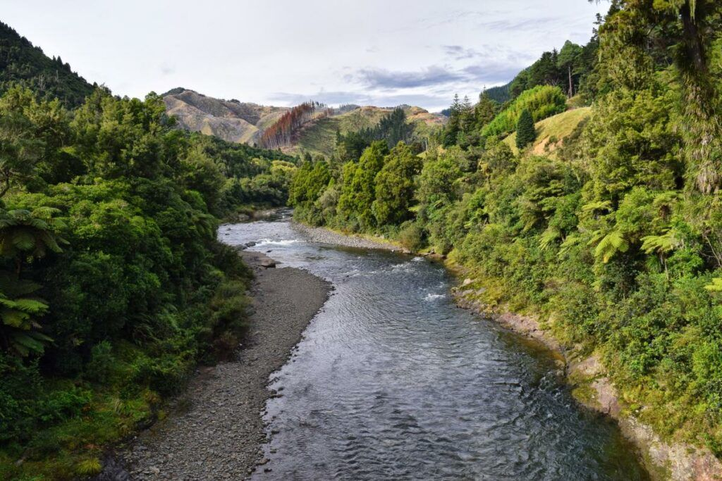 North Island Foodie Itinerary: Two Weeks / 14 Days