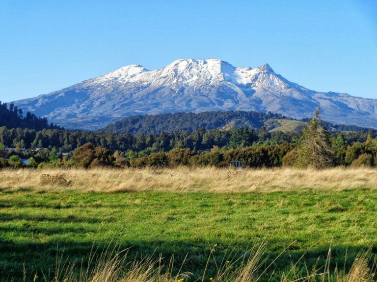 The Best Day Trips from Whanganui