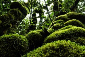 10 Best Things to Do in Egmont National Park