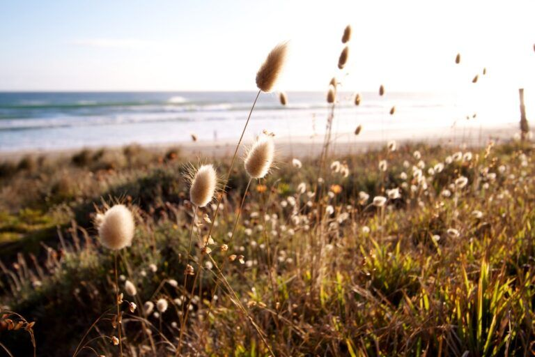 10 Free Camping Spots in Tauranga